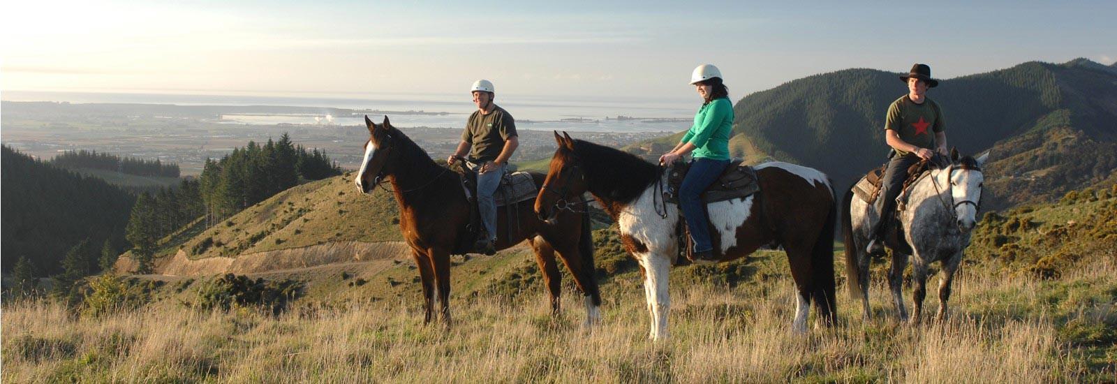 Horse Trekking Abel Tasman